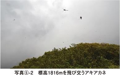 写真5-2 標高1816mを飛び交うアキアカネ