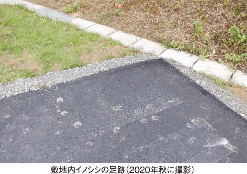 敷地内イノシシの足跡(2020年秋に撮影)