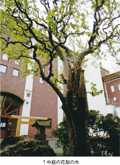 中庭の花梨の木