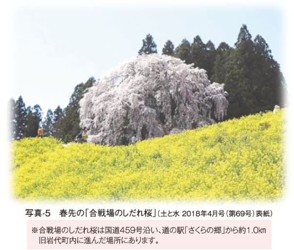 写真-5 春先の「合戦場のしだれ桜」(土と水 2018年4月号(第69号)表紙) ※合戦場のしだれ桜は国道459号沿い、道の駅「さくらの郷」から約1.0㎞  旧岩代町内に進んだ場所にあります。